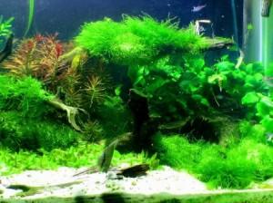 Making the Case For Keeping Aquatic Aquarium Plants