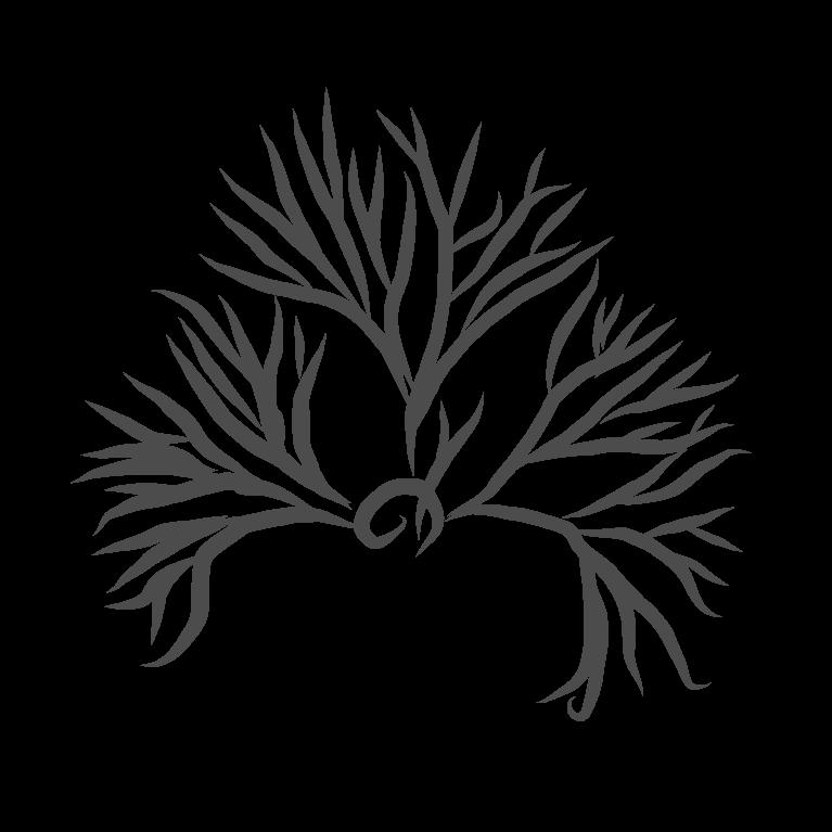 une algue en forme de cerveau