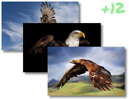 Eagle theme pack