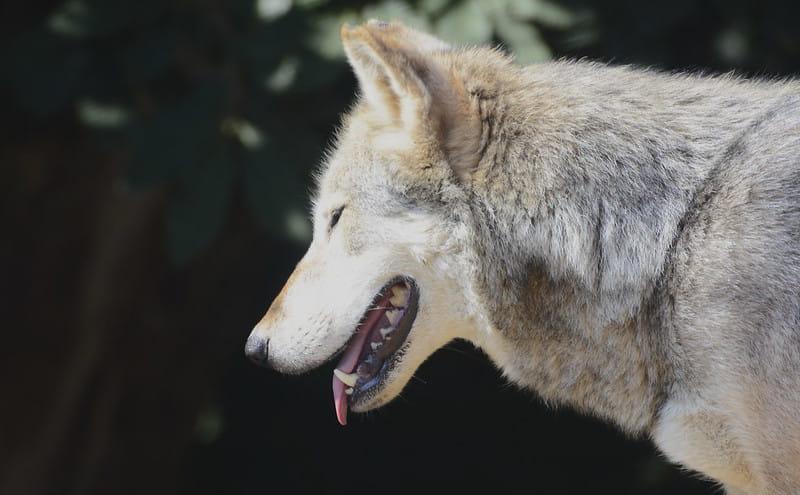 O passado nebuloso dos cães