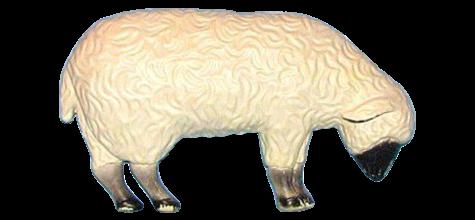 Grazing Lamb photo