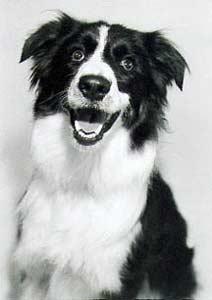 Mr Peabody Smiling