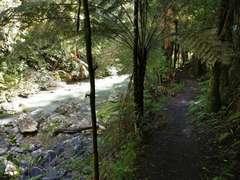 Cosseys Gorge Track