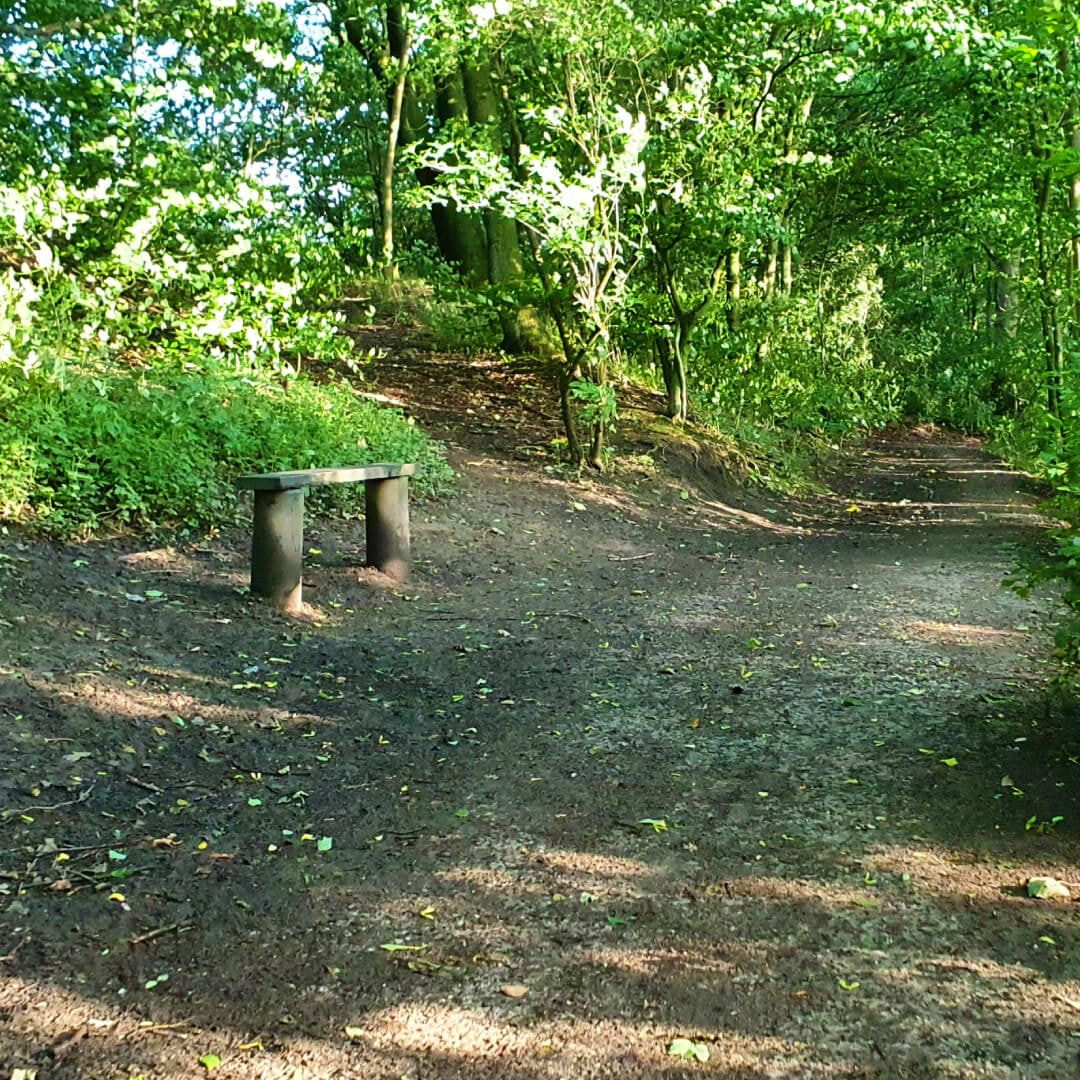 Nan Whins Wood Path with Bench