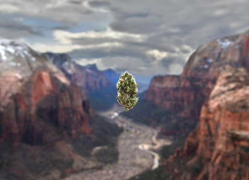 Top 7 Cannabis Images on Instagram