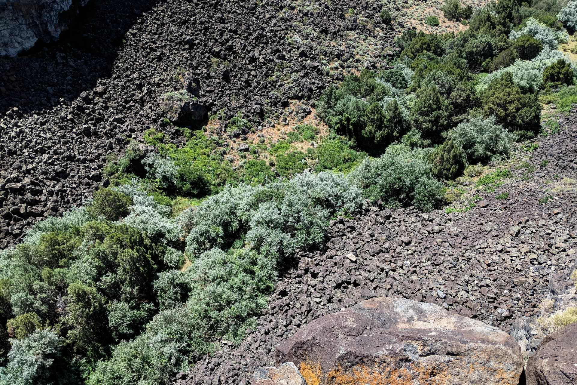 A dense swath of sage, Russian Olives, and native trees cuts diagonally across a field of broken basalt boulders.