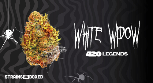 7ACRES – White Widow Strain