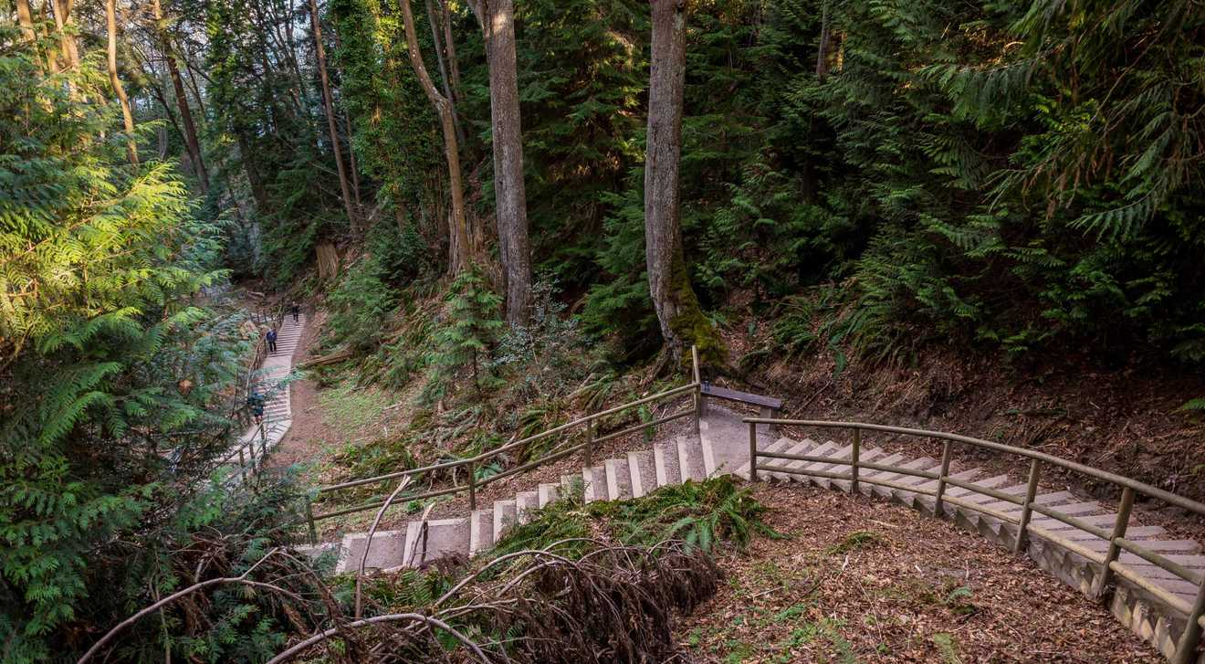 A trail between large trees in Pacific Spirt Park, an urban forest in Vancouver