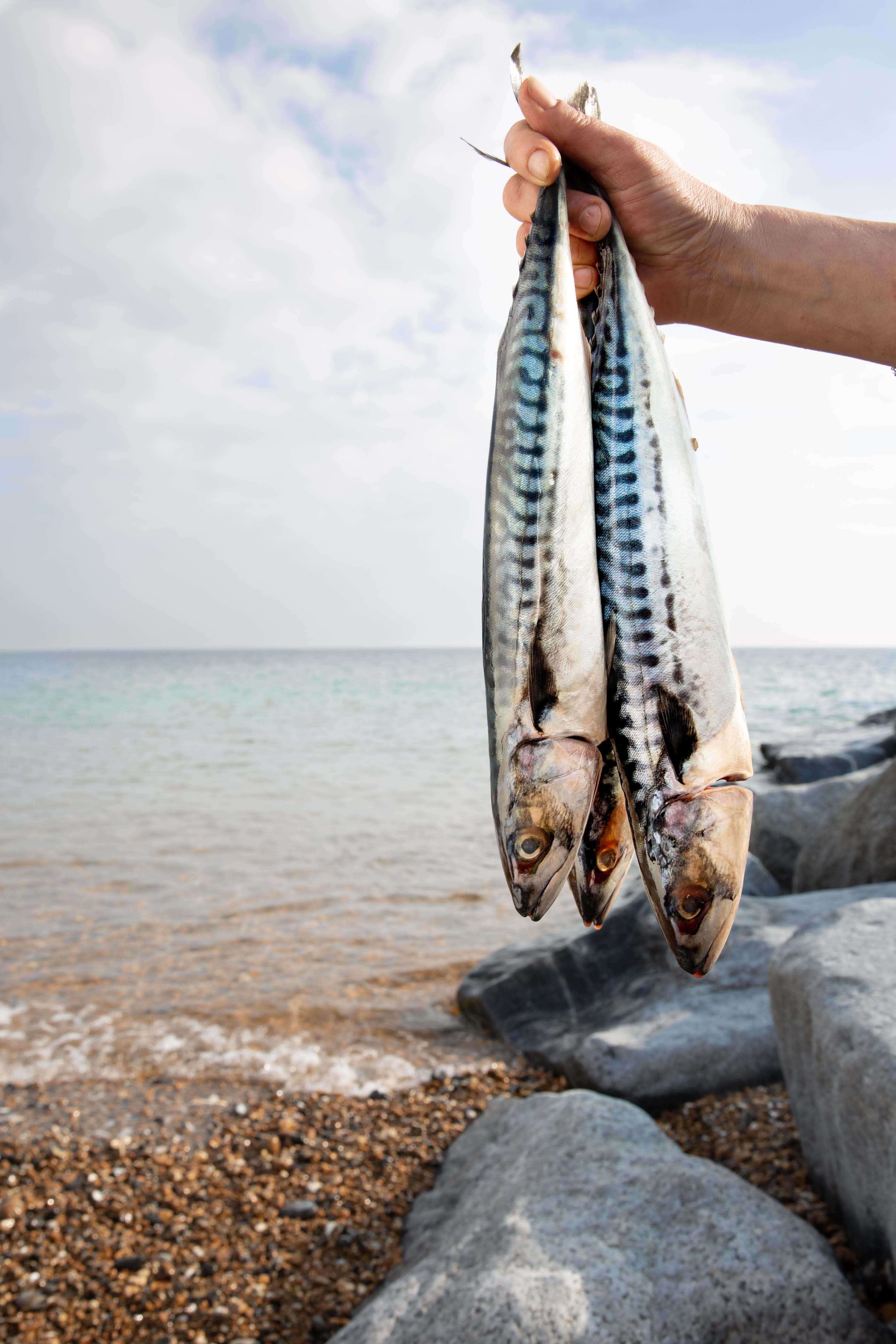 Three fresh mackerel being held up on the beach.