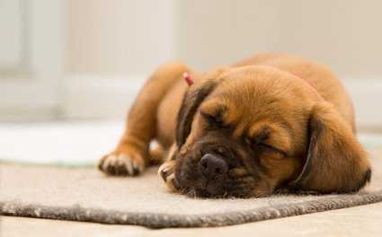 How to Train a New Puppy at Home