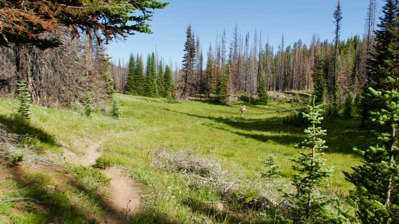 Crossing a small, grassy meadow on the PCT