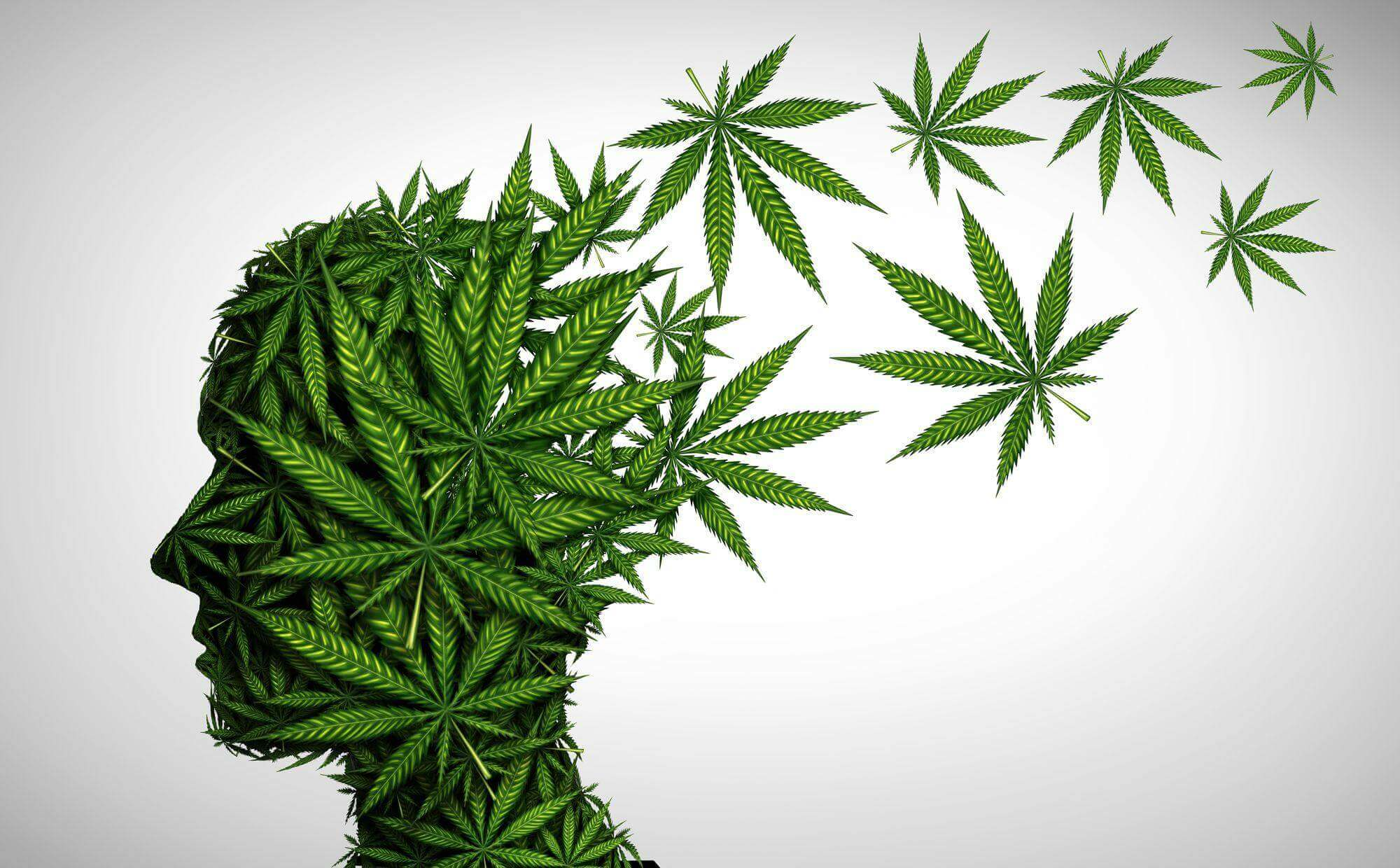 How long does Cannabis stay in your system?