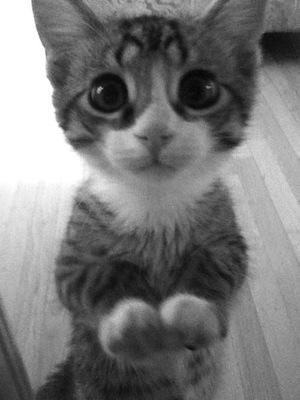 Um gatinho com olhinhos de pedindo alguma coisa