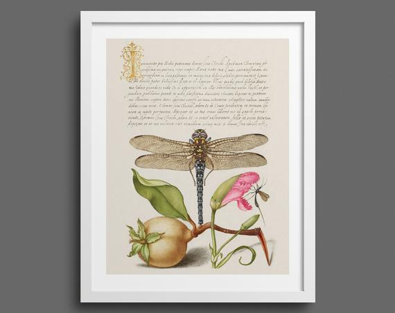 Dragonfly, Pear and Carnation