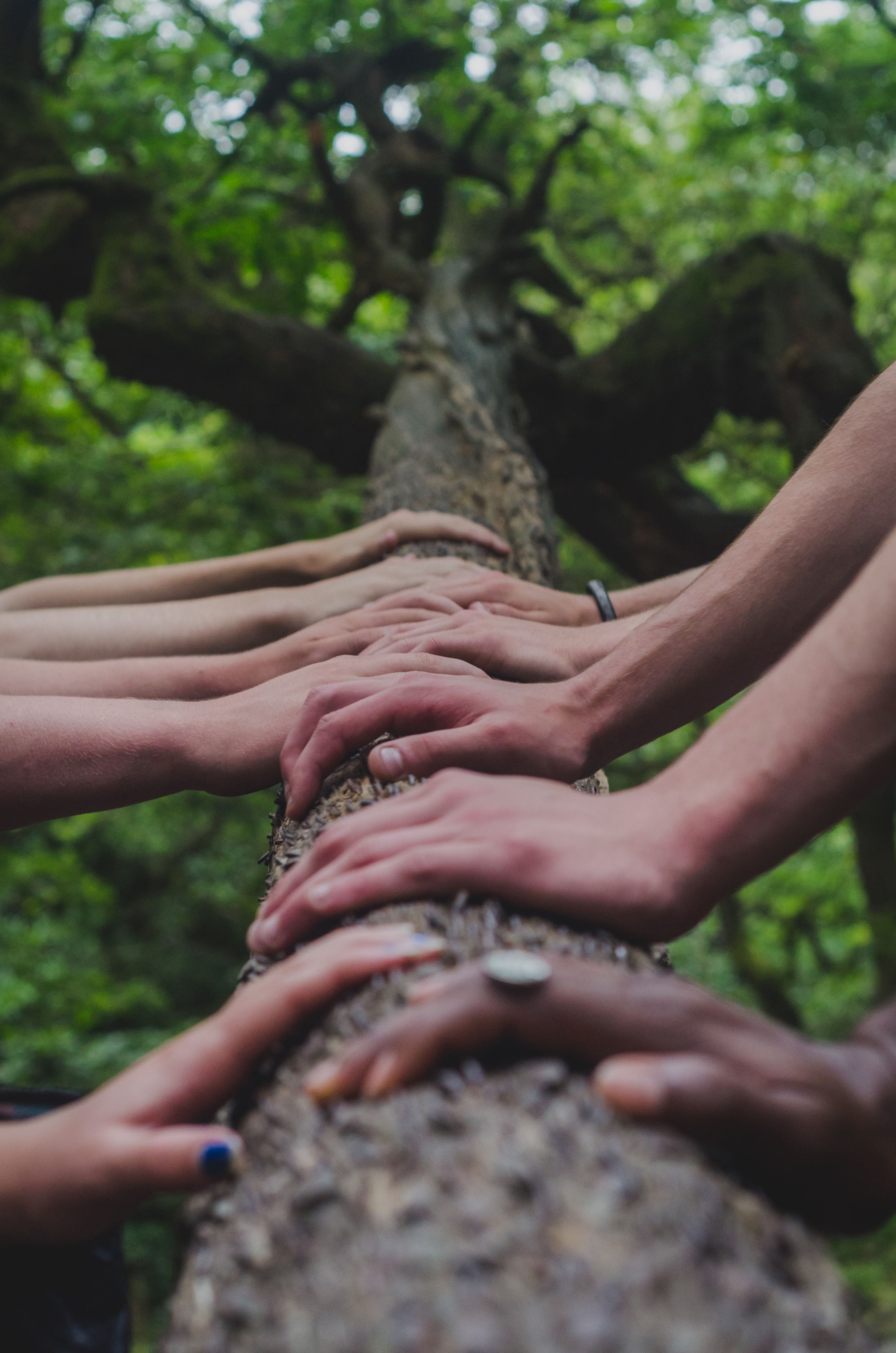 group of diverse people hands on tree trunk outdoors