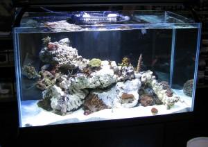 Oceanic Aquariums Guide