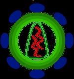 geno2pheno[coreceptor-hiv2]