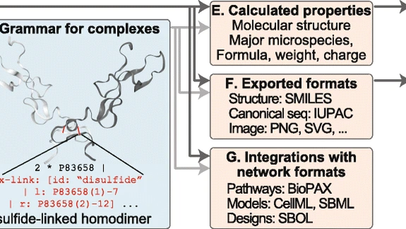 BpForms and BcForms: a toolkit for concretely describing non-canonical polymers and complexes to facilitate global biochemical networks
