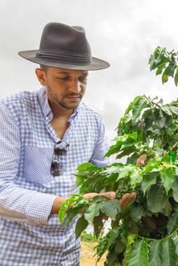 A man examining a plant