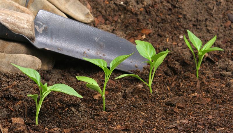 Imagem em destaque para o artigo: Adubo inteligente? Conheça o adubo que fertiliza plantas por até 3 meses!