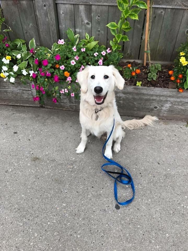 leash commands