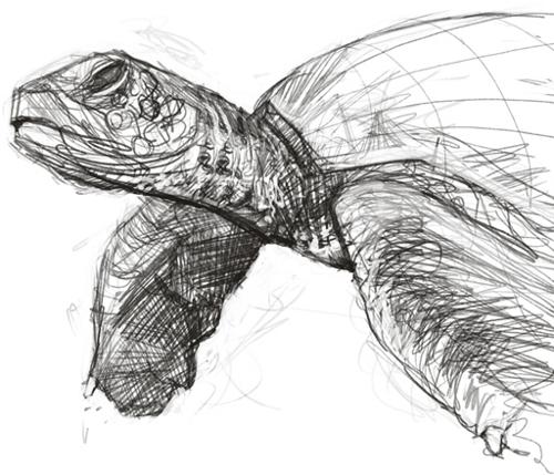 Turtle Sketch