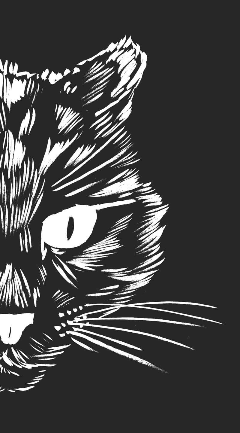 tete de chat en colère à gauche