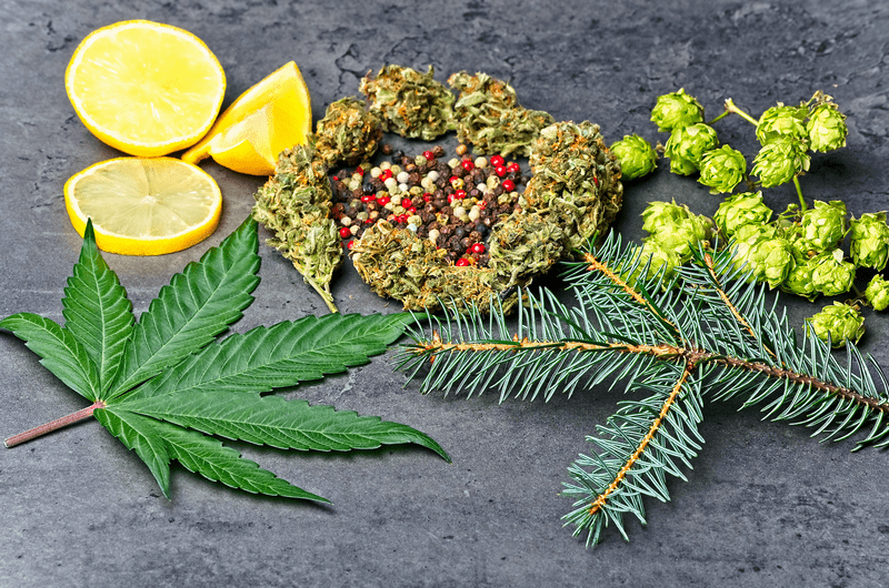 3 Combinations of Terpenes and Vitamins to Beat Stress, Insomnia and Chronic Pain