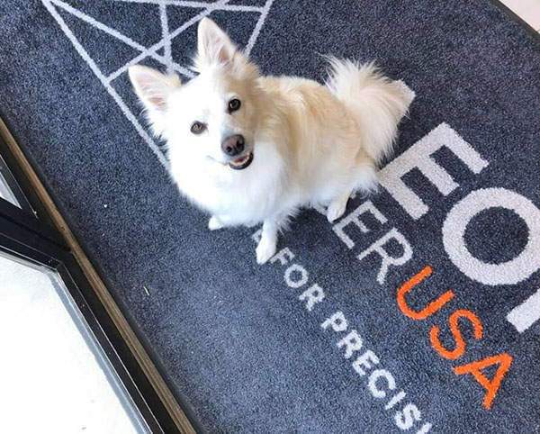 Kira, a cute white fluffy dog, sitting on a rug that says Aeon Laser USA, and looking up at the camera with a sweet look and triangluar ears up in the air like two little antennas