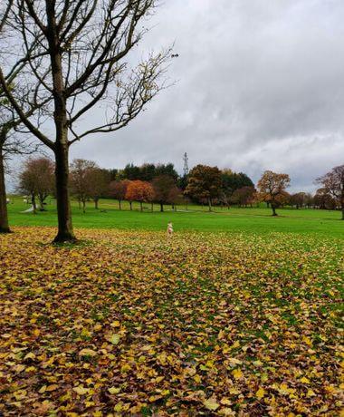 Bramley Park