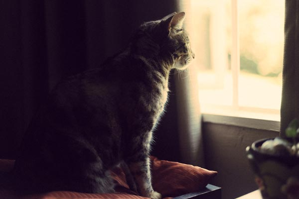 A cat looking out a window.