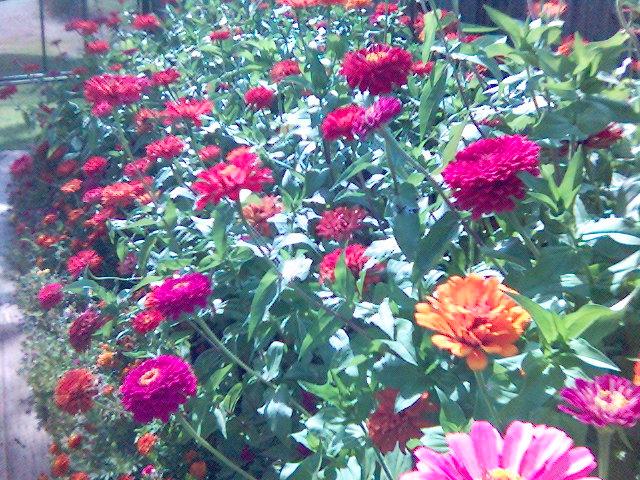 moms flowers