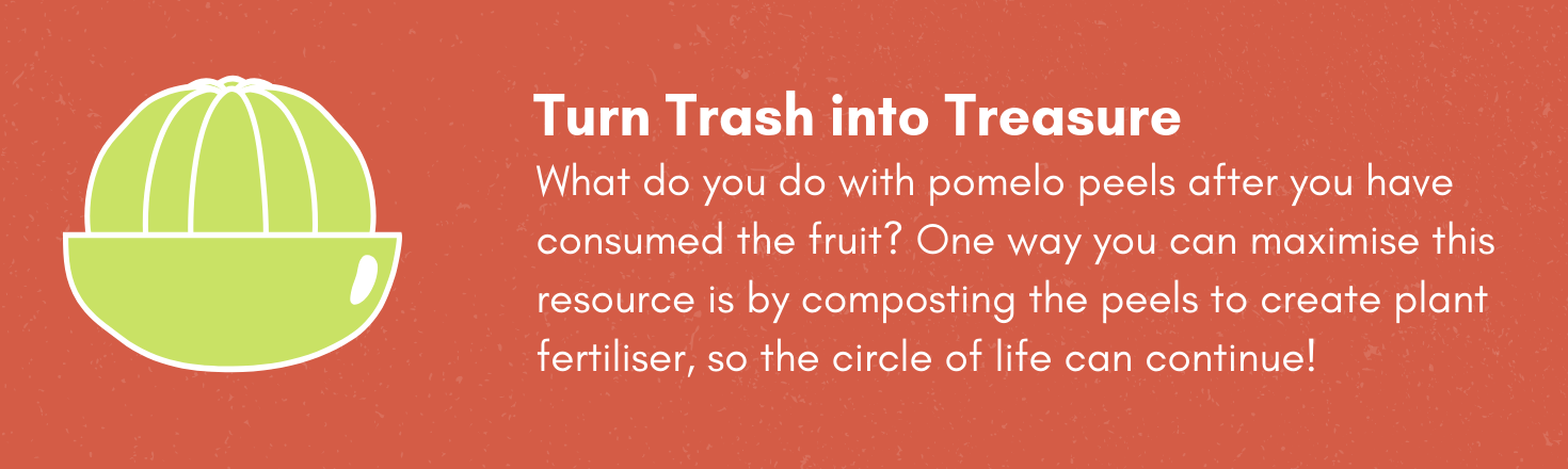 Turn Trash into Treasure! What do you do with pomelo peels after you have consumed the fruit? One way you can maximise this resource is by composting the peels to create plant fertiliser, so the circle of life can continue!