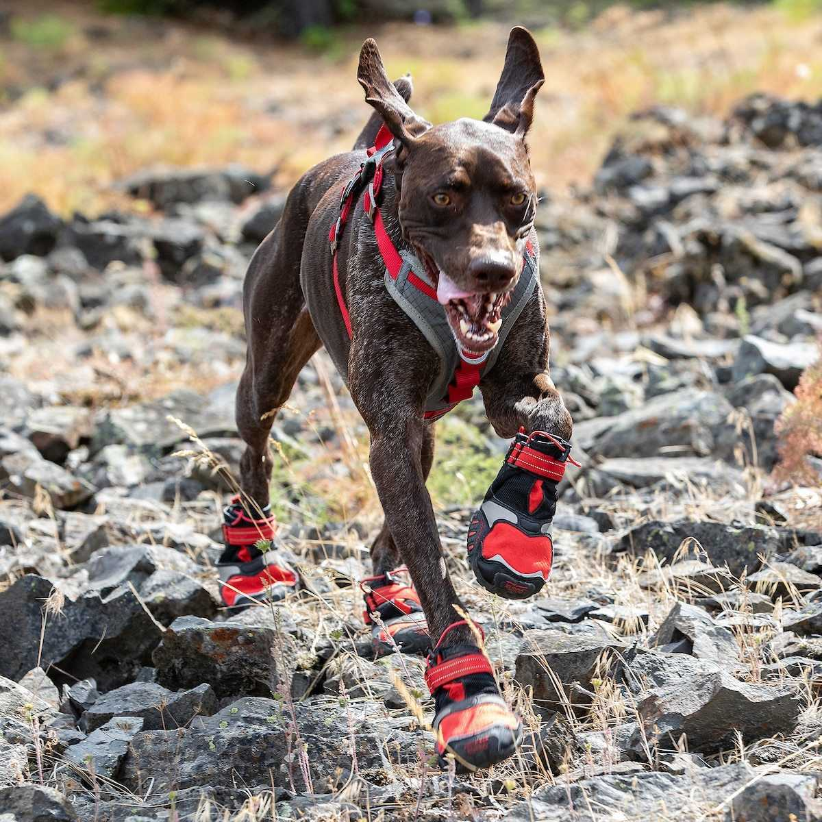 How to get your dog comfortable with wearing shoes
