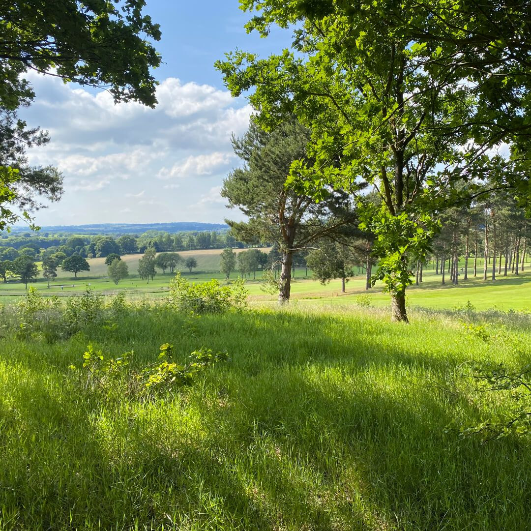 Meanwood Valley Local Nature Reserve field