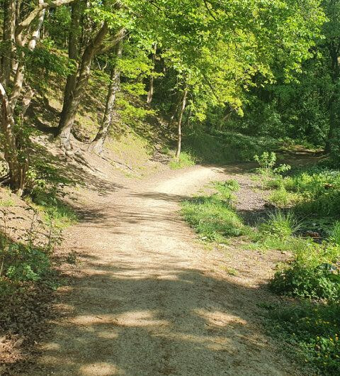 Dry dirt path up into the woods at Post Hill