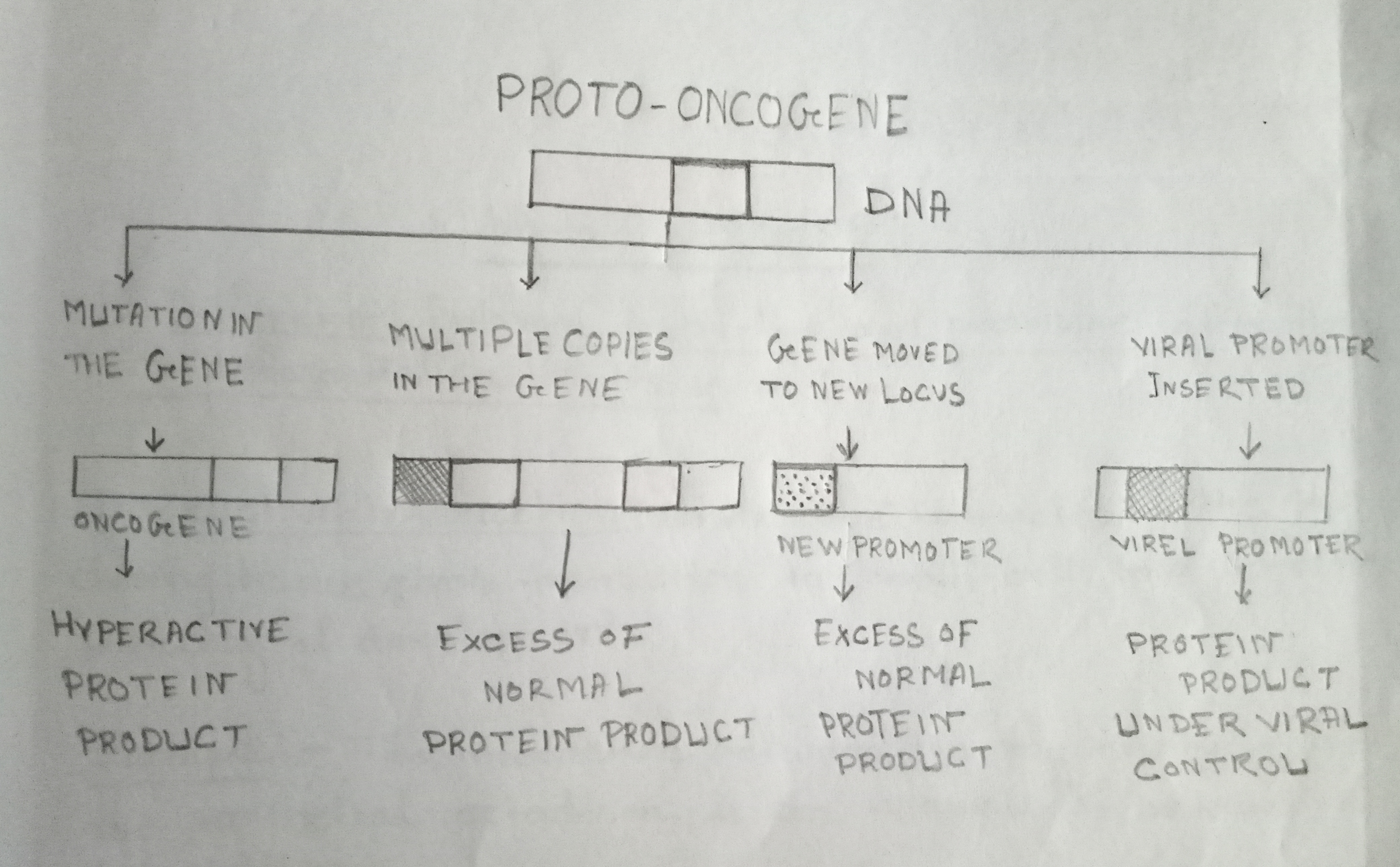 Alternate ways of converting Proto-oncogenes to oncogenes