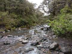 Wairere Stream