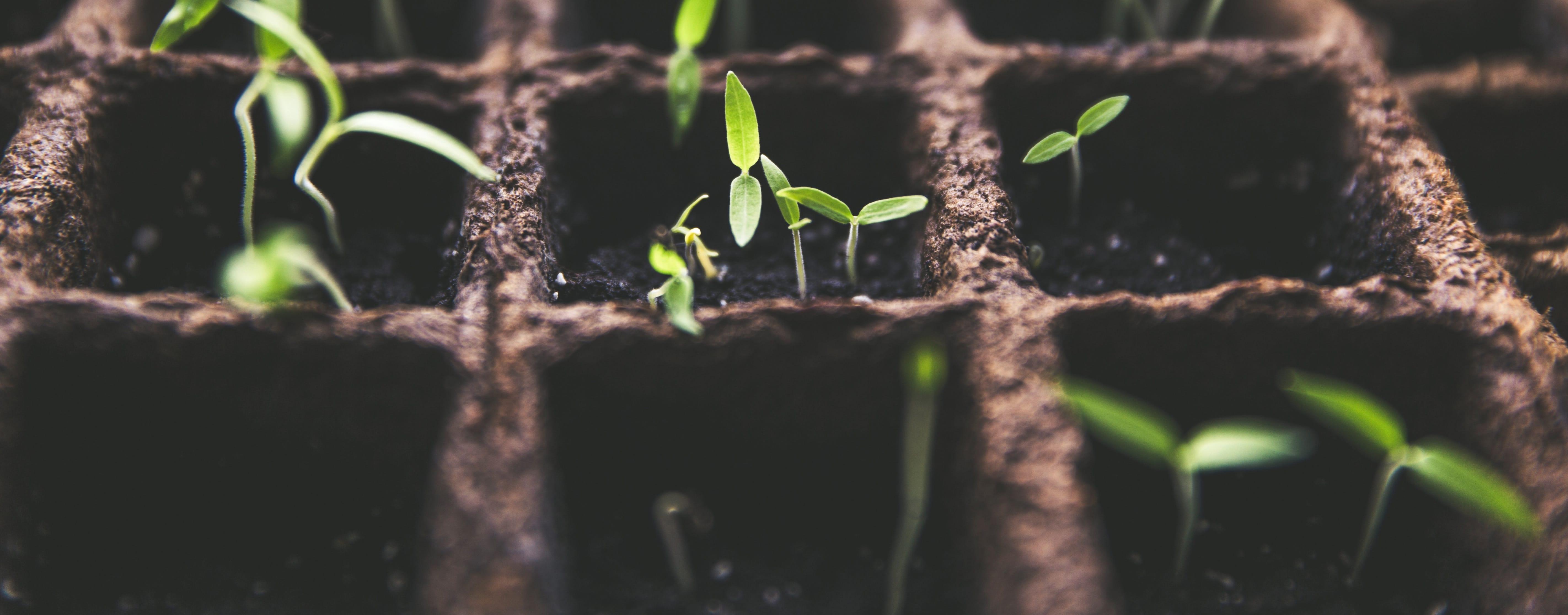 Photo of sprouting plants. Credit Markus Spiske on unsplash