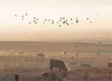 Wetlands with cows grazing and birds flying