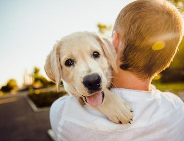 Why Don't Dogs Live Longer?