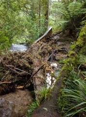 stream-crossing.jpg