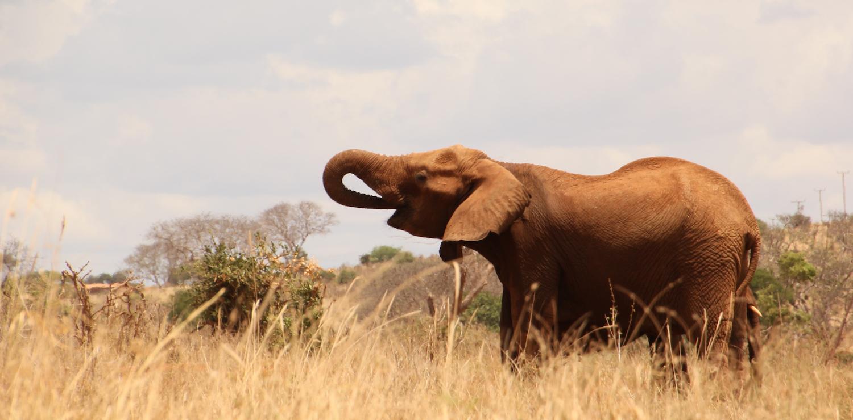 Field Reports: Counter-Poaching at Tsavo East Park, Kenya