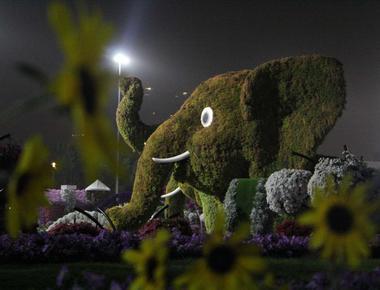 Grădina Miracle din Dubai, este cel mai mare parc de flori din lume