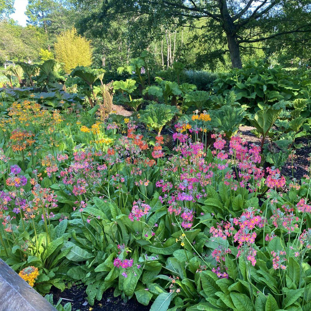 Golden Acre Park Flowers