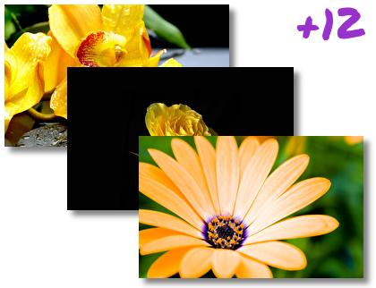 Yellow Flowers theme pack