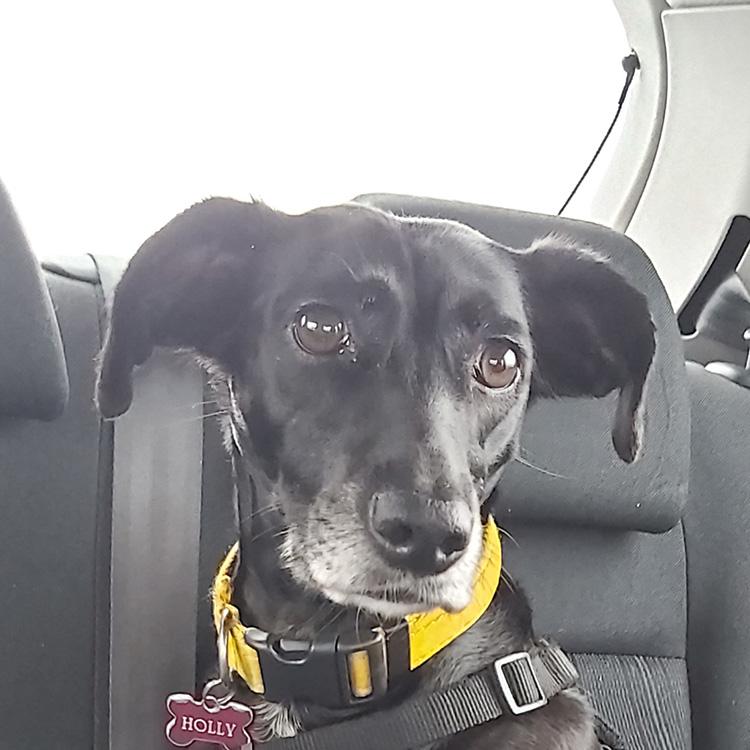 Meet Holly