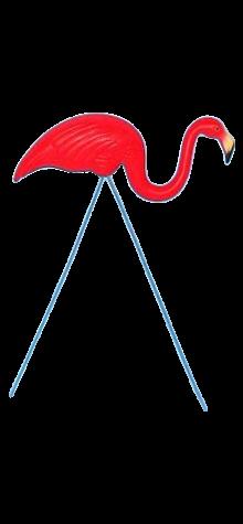 Red Flamingo photo