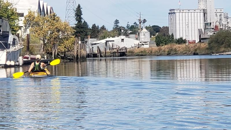 Kayaking on the Petaluma river