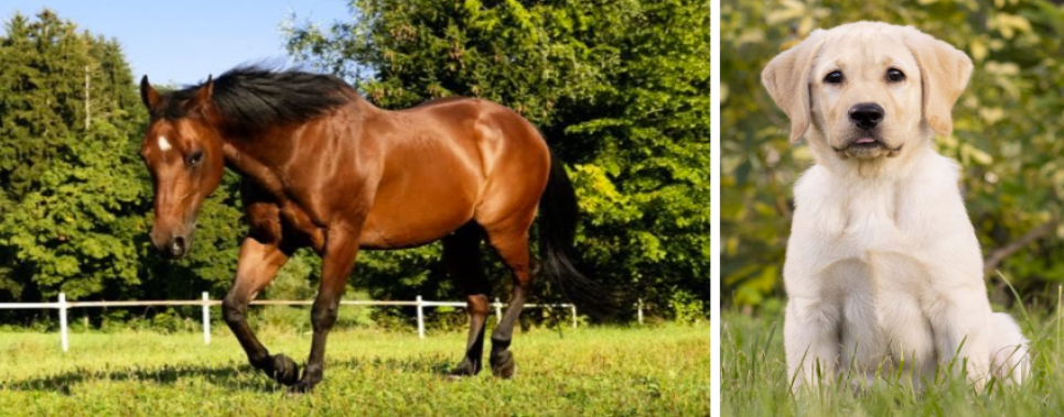 Picture of a horse and a dog